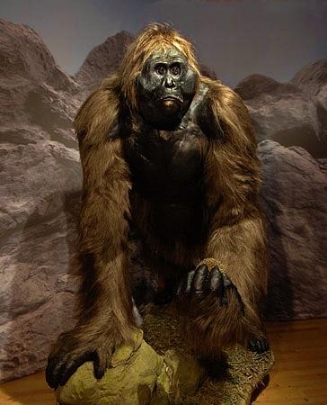 29-Gigantopithecus-model_lg