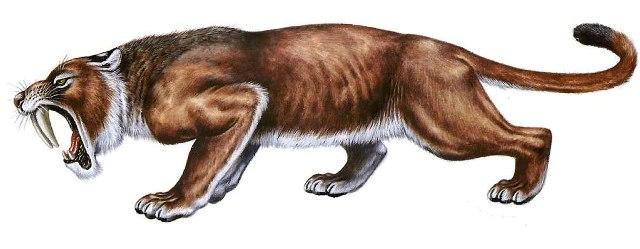 eusmilus-sabre-toothed-tiger