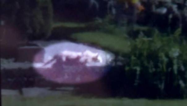 Is this fuzzy photo proof of an African lion roaming Milwaukee?