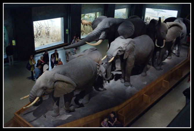 1280px-african_hall_american_museum_of_natural_history_7171355207