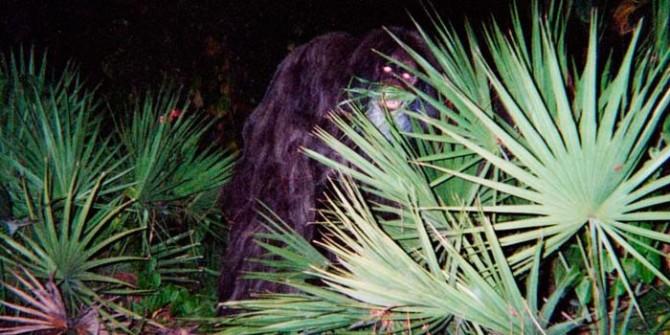 skunk3